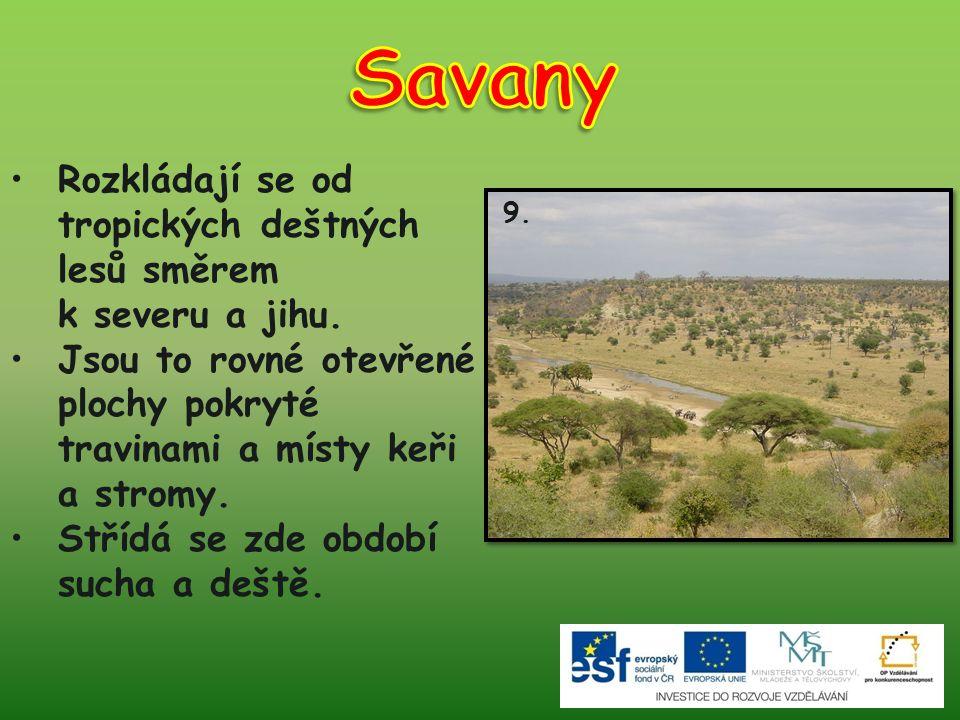 Savany Rozkládají se od tropických deštných lesů směrem k severu a jihu. Jsou to rovné otevřené plochy pokryté travinami a místy keři a stromy.