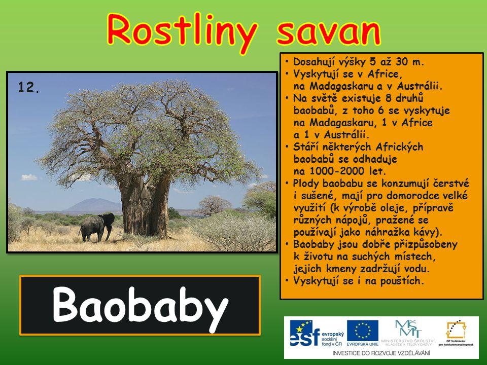 Baobaby Rostliny savan 12. Dosahují výšky 5 až 30 m.