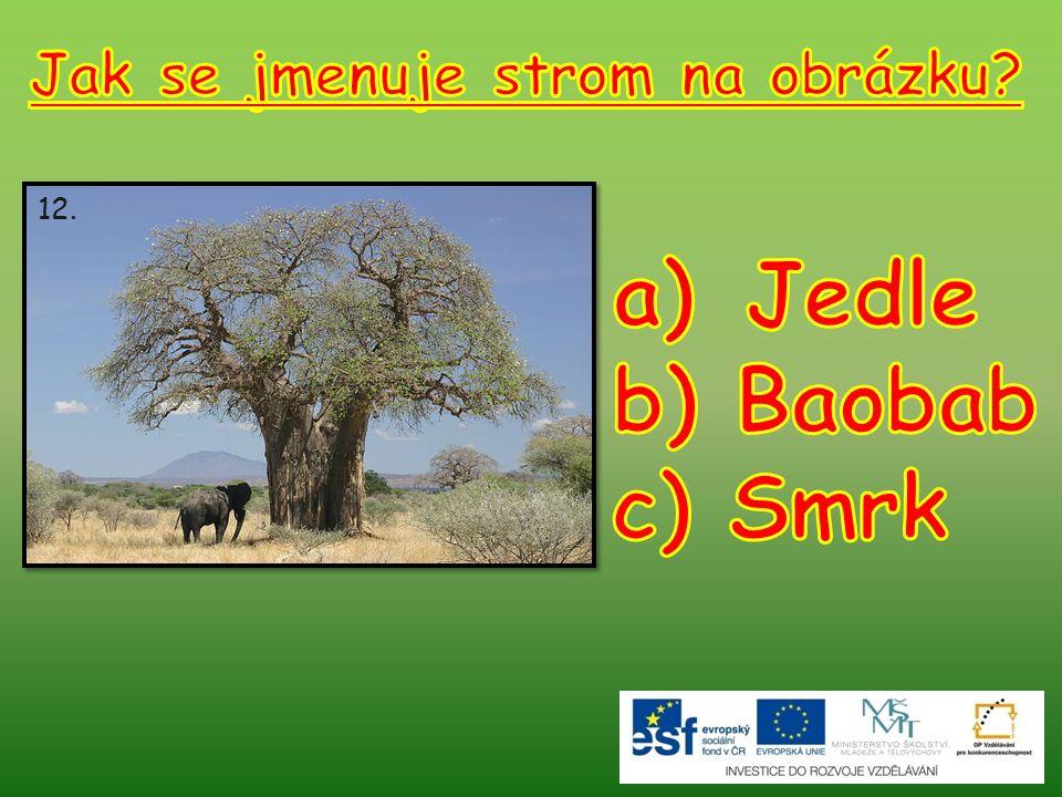 Jak se jmenuje strom na obrázku