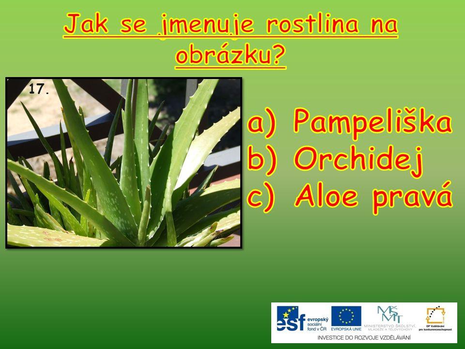 Jak se jmenuje rostlina na obrázku