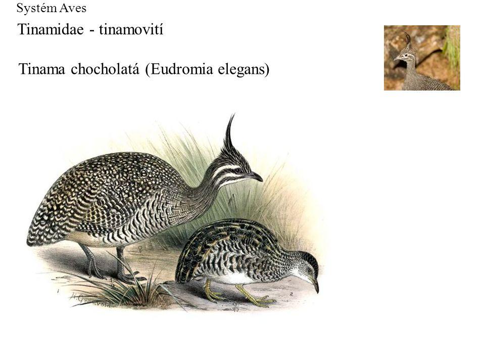 Tinamidae - tinamovití