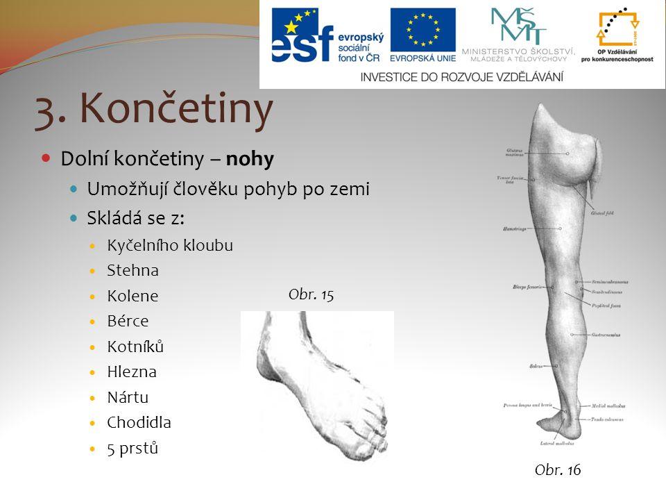 3. Končetiny Dolní končetiny – nohy Umožňují člověku pohyb po zemi