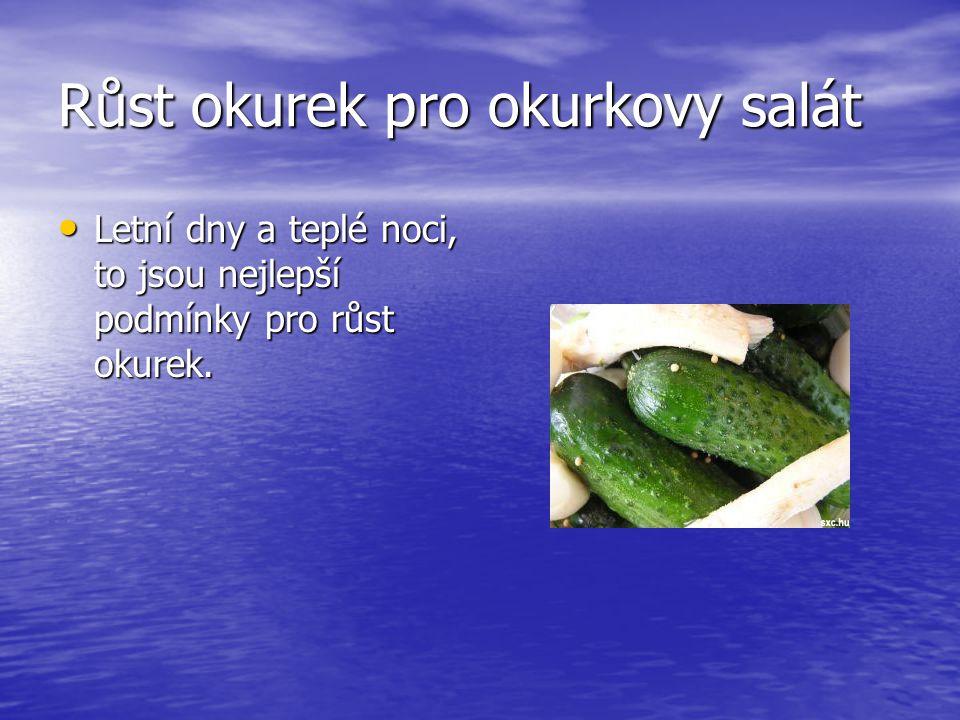 Růst okurek pro okurkovy salát