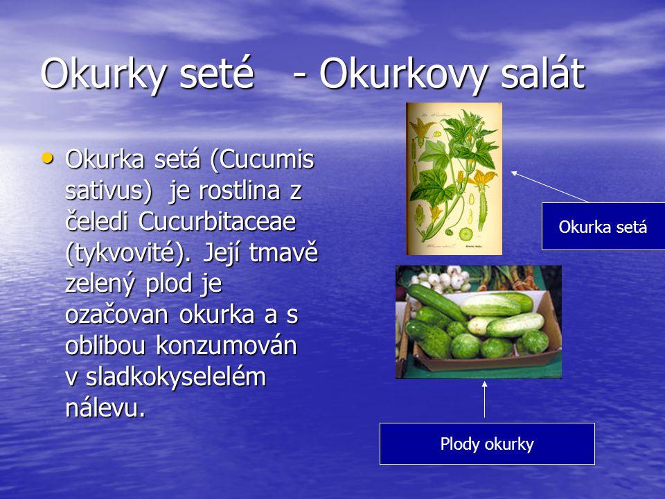 Okurky seté - Okurkovy salát