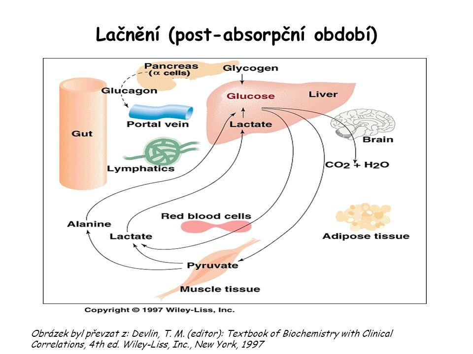 Lačnění (post-absorpční období)