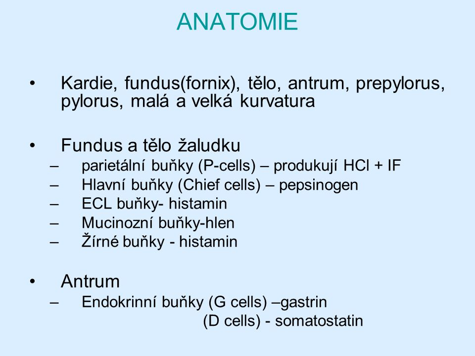 ANATOMIE Kardie, fundus(fornix), tělo, antrum, prepylorus, pylorus, malá a velká kurvatura. Fundus a tělo žaludku.