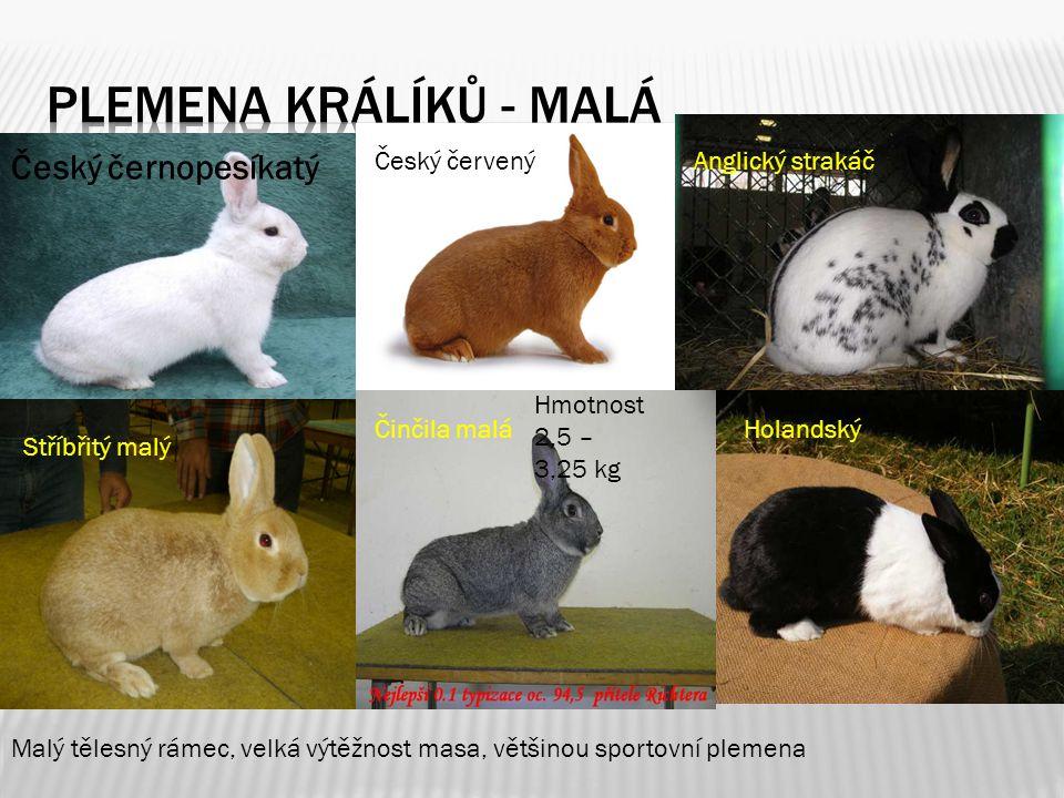 Plemena králíků - malá Český černopesíkatý Český červený