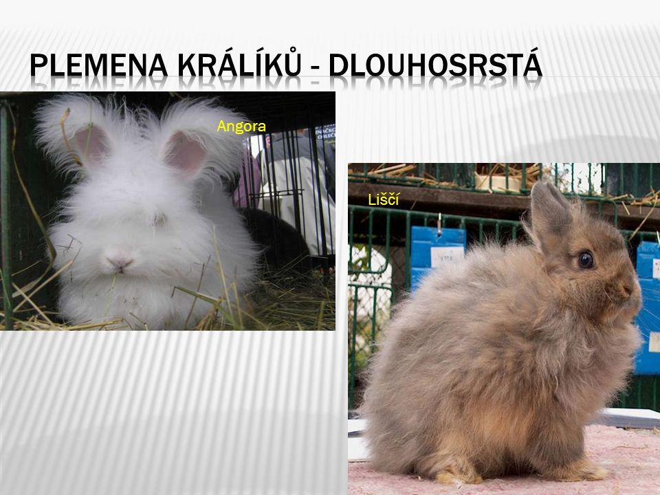 Plemena králíků - Dlouhosrstá