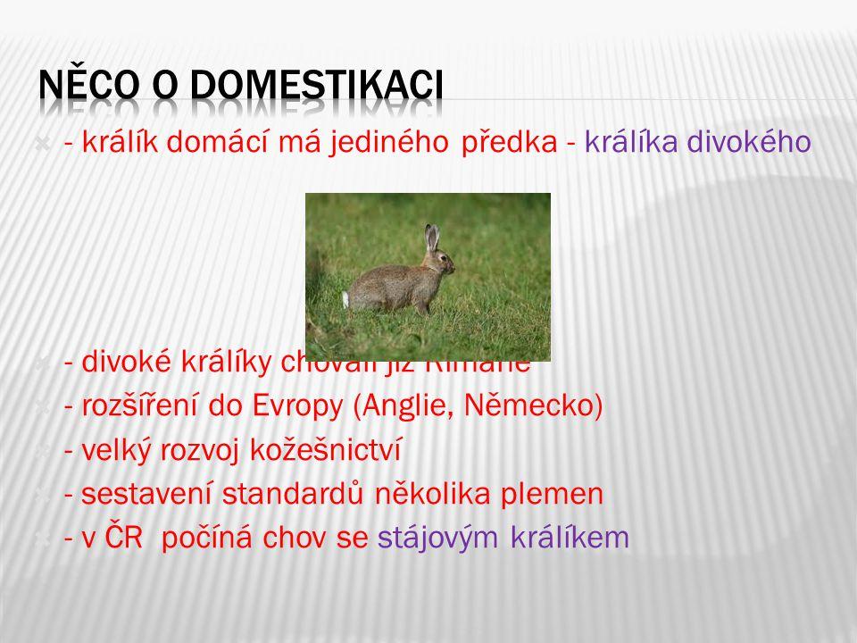 NĚCO O DOMESTIKACI - králík domácí má jediného předka - králíka divokého. - divoké králíky chovali již Římané.