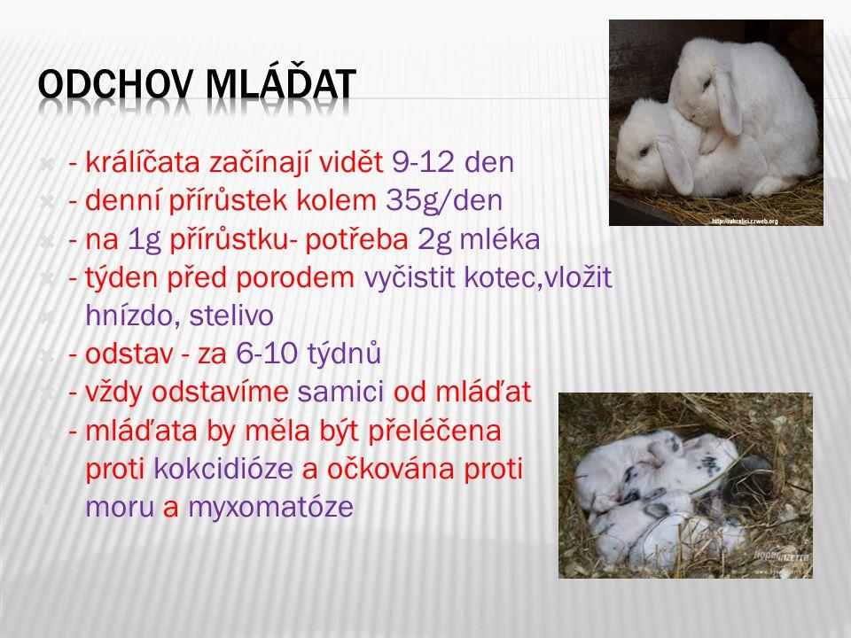 Odchov mláďat - králíčata začínají vidět 9-12 den
