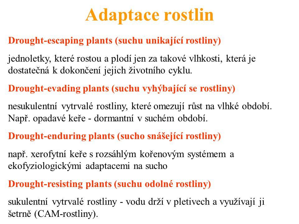 Adaptace rostlin Drought-escaping plants (suchu unikající rostliny)