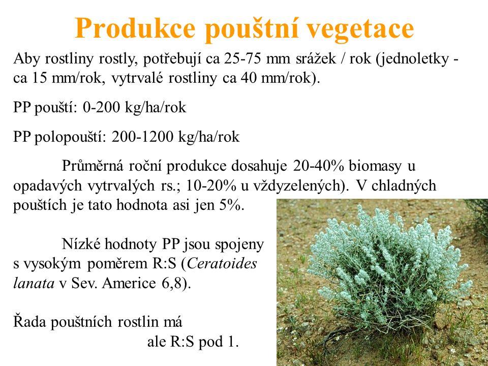Produkce pouštní vegetace