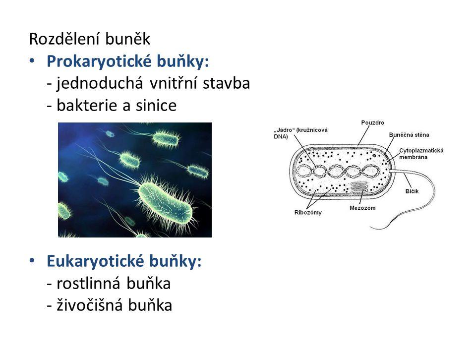 Rozdělení buněk Prokaryotické buňky: - jednoduchá vnitřní stavba. - bakterie a sinice. Eukaryotické buňky:
