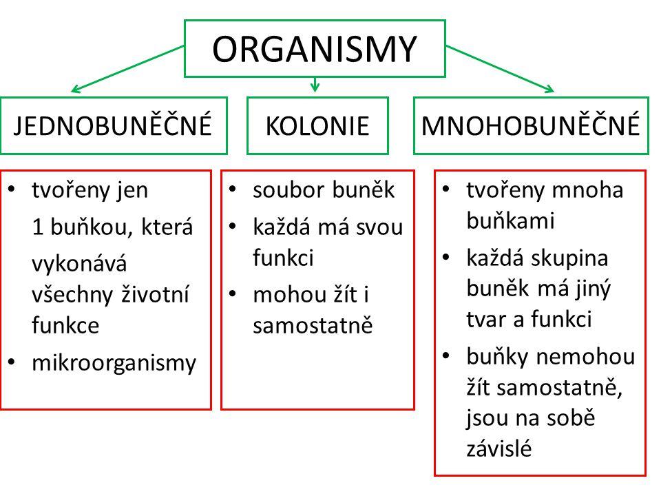 ORGANISMY JEDNOBUNĚČNÉ KOLONIE MNOHOBUNĚČNÉ tvořeny jen