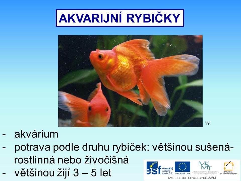 AKVARIJNÍ RYBIČKY akvárium