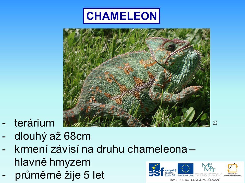 krmení závisí na druhu chameleona – hlavně hmyzem