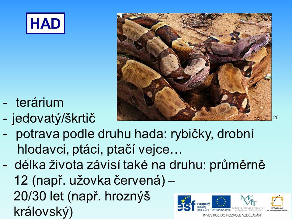 HAD terárium jedovatý/škrtič potrava podle druhu hada: rybičky, drobní