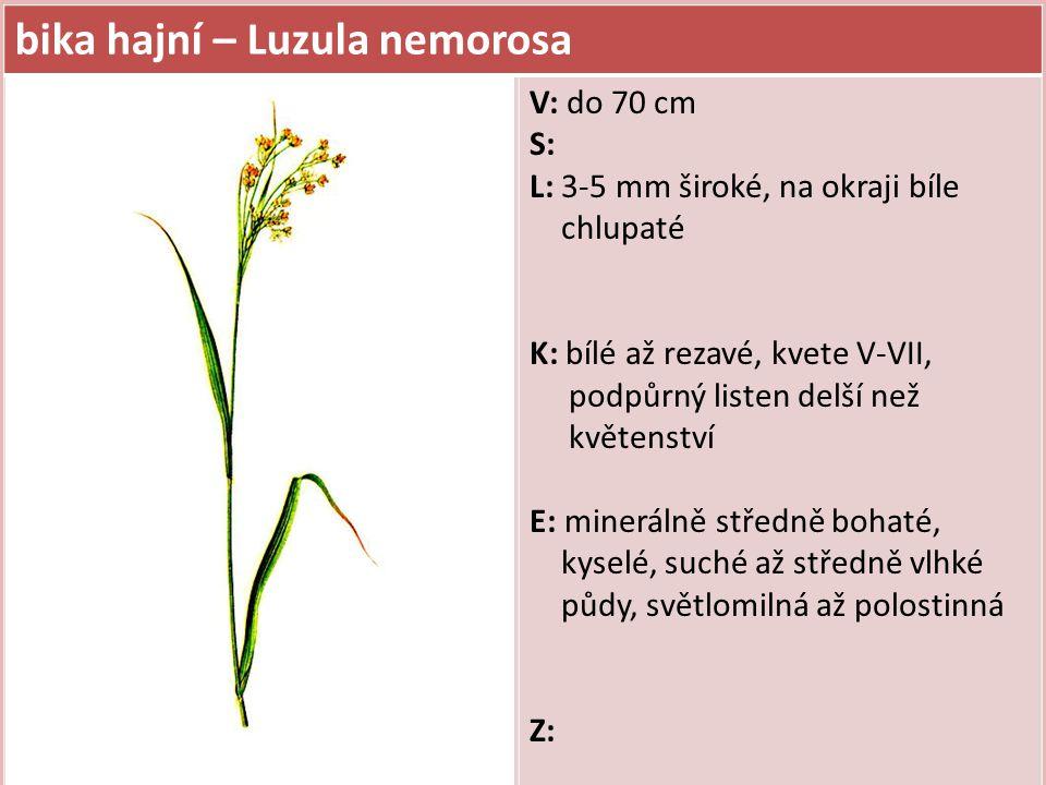 bika hajní – Luzula nemorosa