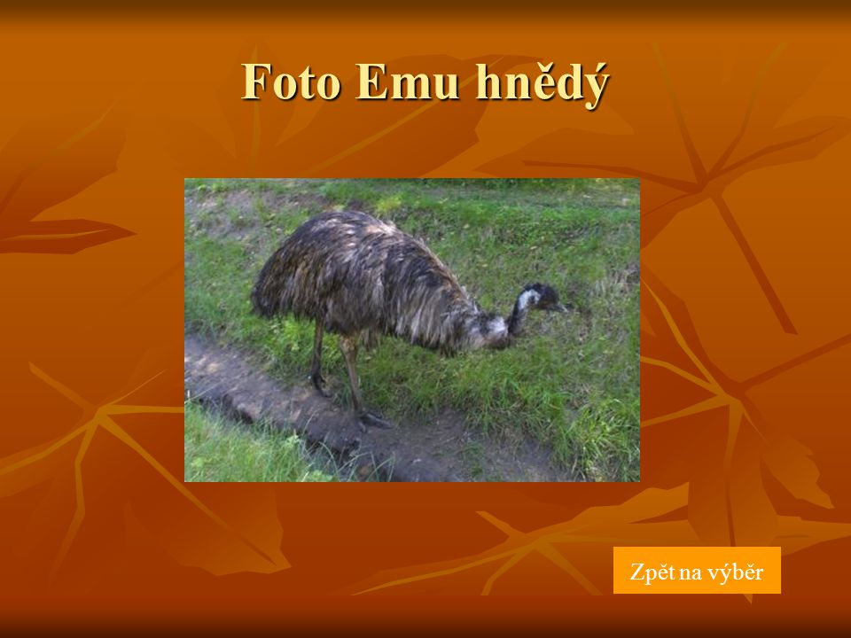 Foto Emu hnědý Zpět na výběr