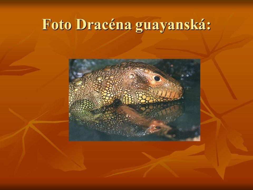 Foto Dracéna guayanská: