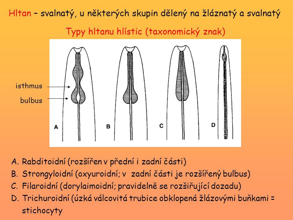 Typy hltanu hlístic (taxonomický znak)