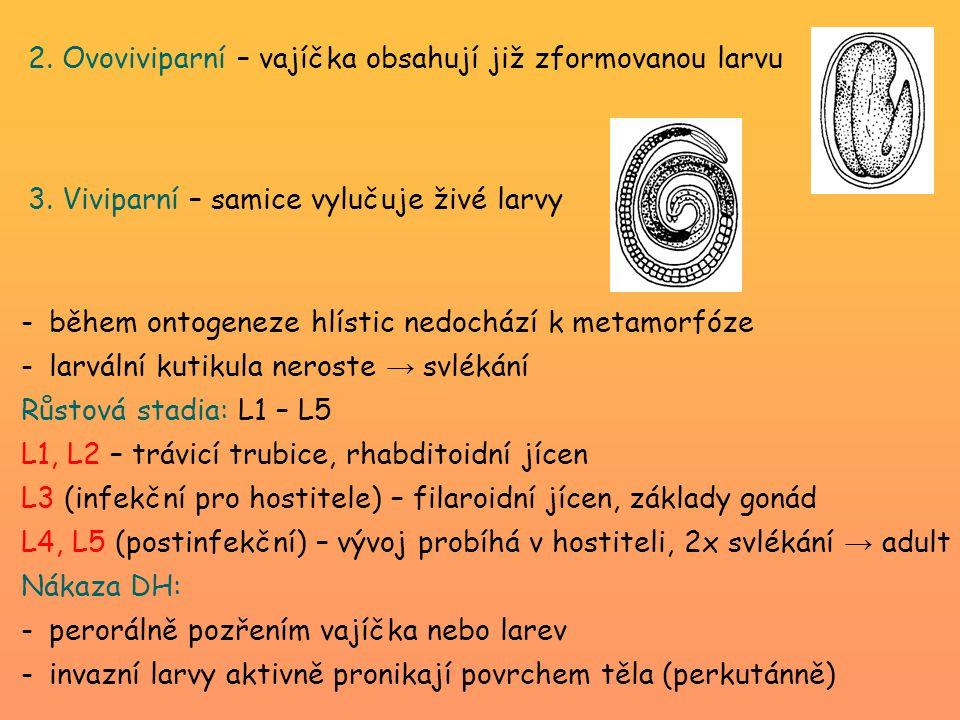 2. Ovoviviparní – vajíčka obsahují již zformovanou larvu