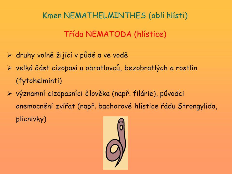 Kmen NEMATHELMINTHES (oblí hlísti) Třída NEMATODA (hlístice)