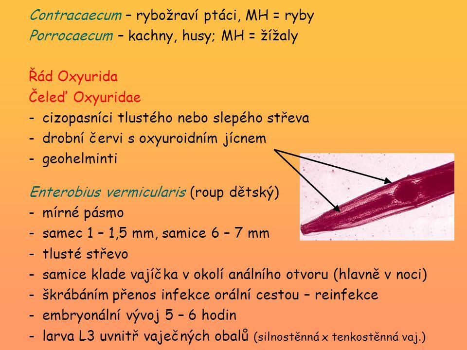Contracaecum – rybožraví ptáci, MH = ryby
