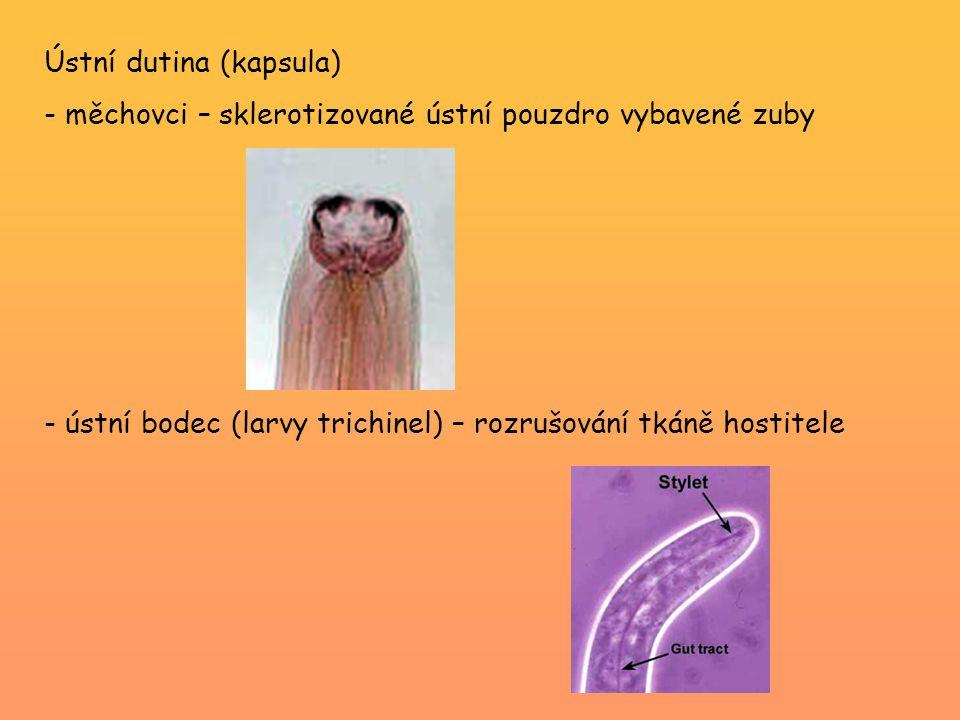 Ústní dutina (kapsula)