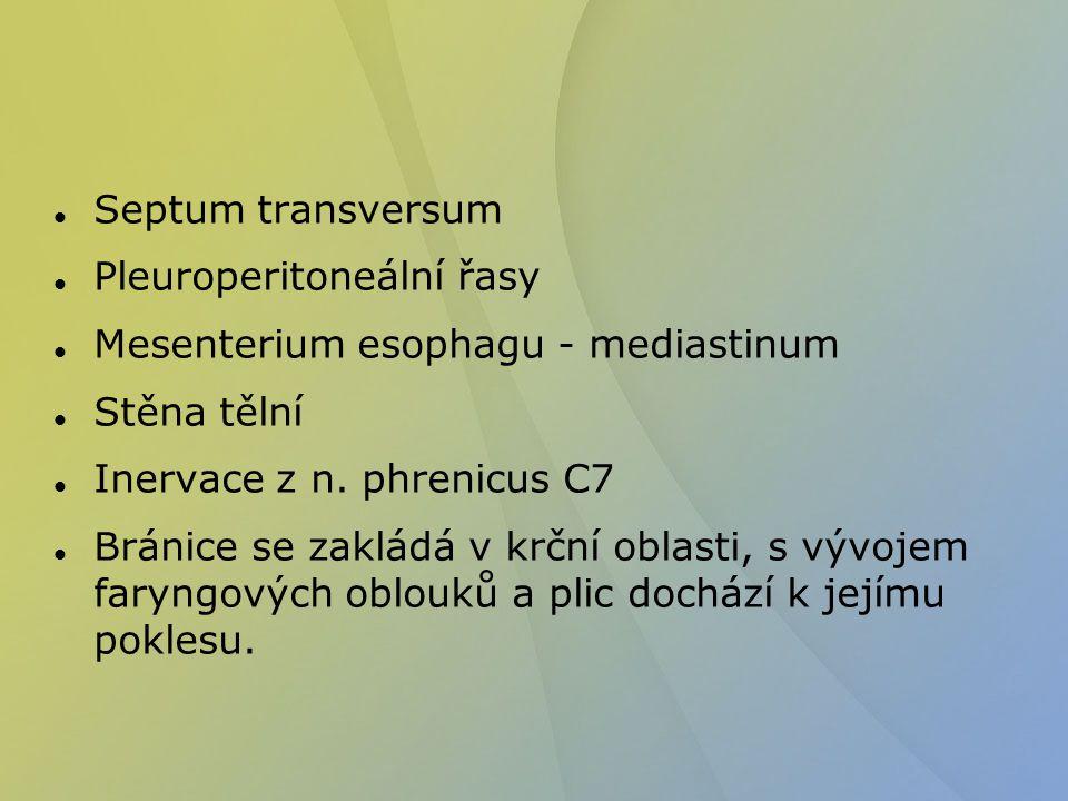 Septum transversum Pleuroperitoneální řasy. Mesenterium esophagu - mediastinum. Stěna tělní. Inervace z n. phrenicus C7.