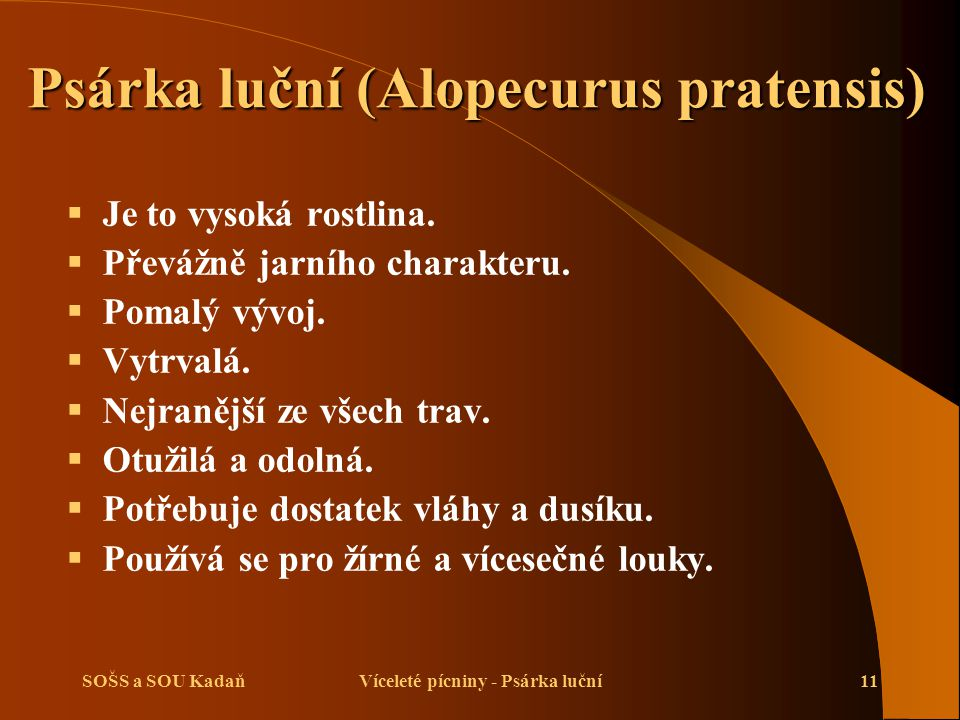 Psárka luční (Alopecurus pratensis)