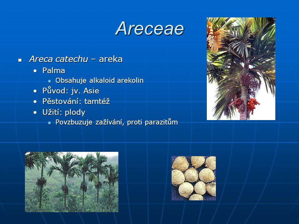 Areceae Areca catechu – areka Palma Původ: jv. Asie Pěstování: tamtéž