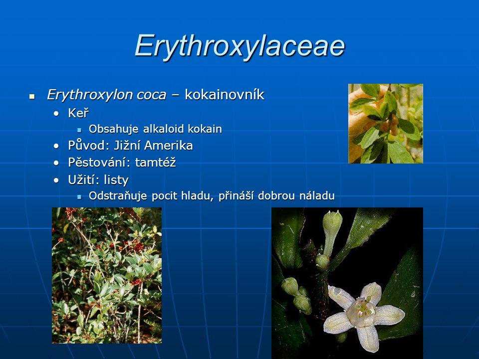 Erythroxylaceae Erythroxylon coca – kokainovník Keř