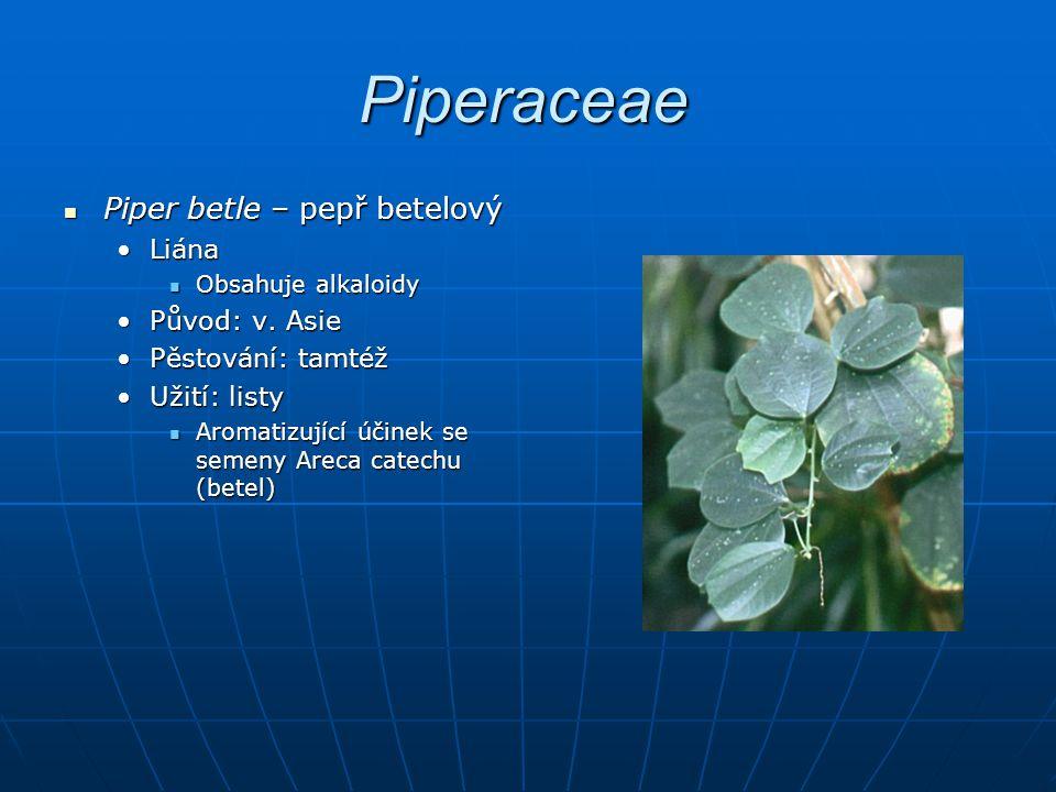 Piperaceae Piper betle – pepř betelový Liána Původ: v. Asie