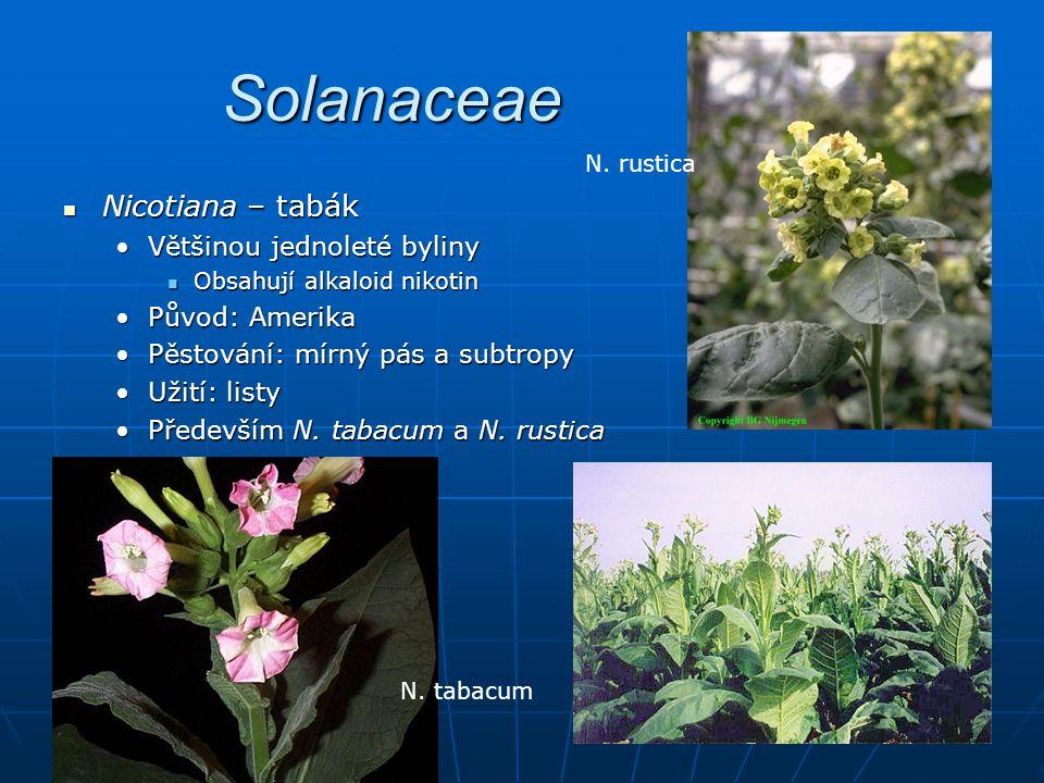Solanaceae Nicotiana – tabák Většinou jednoleté byliny Původ: Amerika