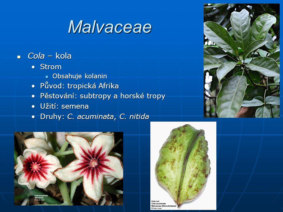 Malvaceae Cola – kola Strom Původ: tropická Afrika