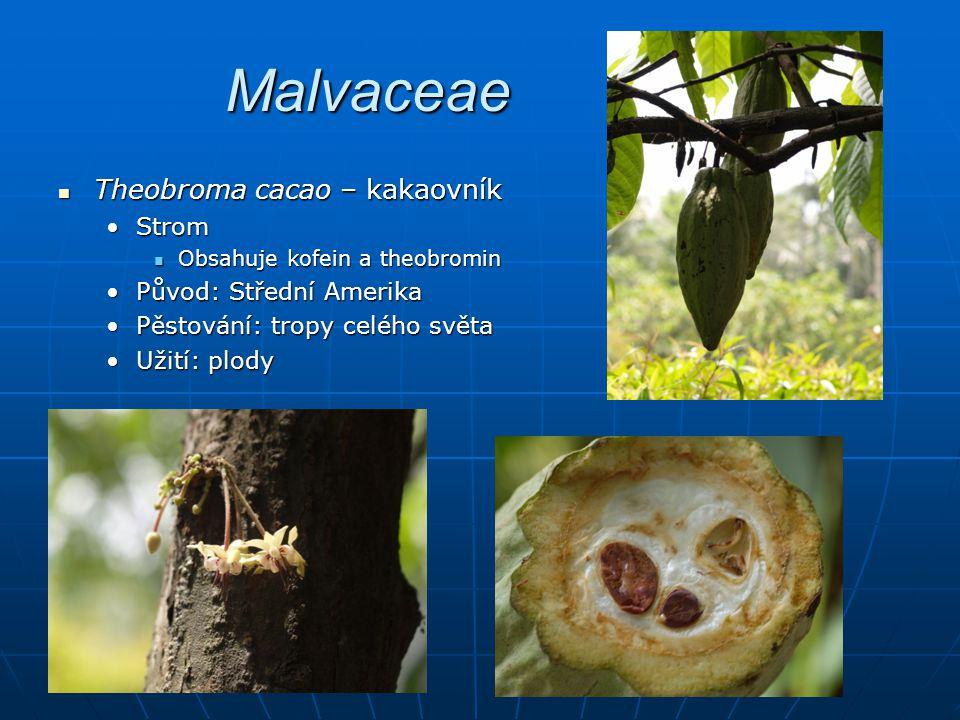 Malvaceae Theobroma cacao – kakaovník Strom Původ: Střední Amerika