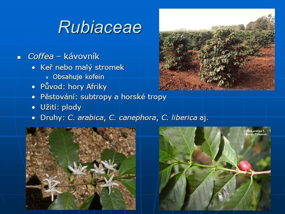 Rubiaceae Coffea – kávovník Keř nebo malý stromek Původ: hory Afriky