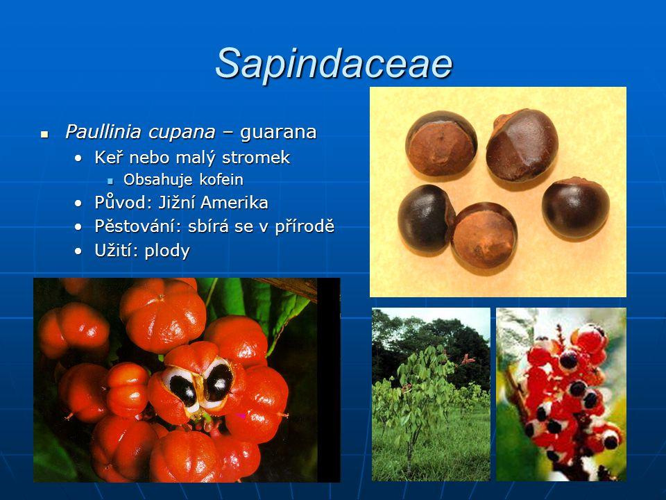 Sapindaceae Paullinia cupana – guarana Keř nebo malý stromek