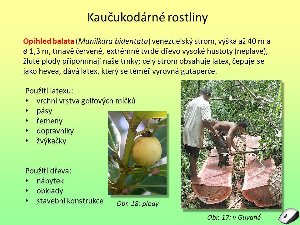 Kaučukodárné rostliny