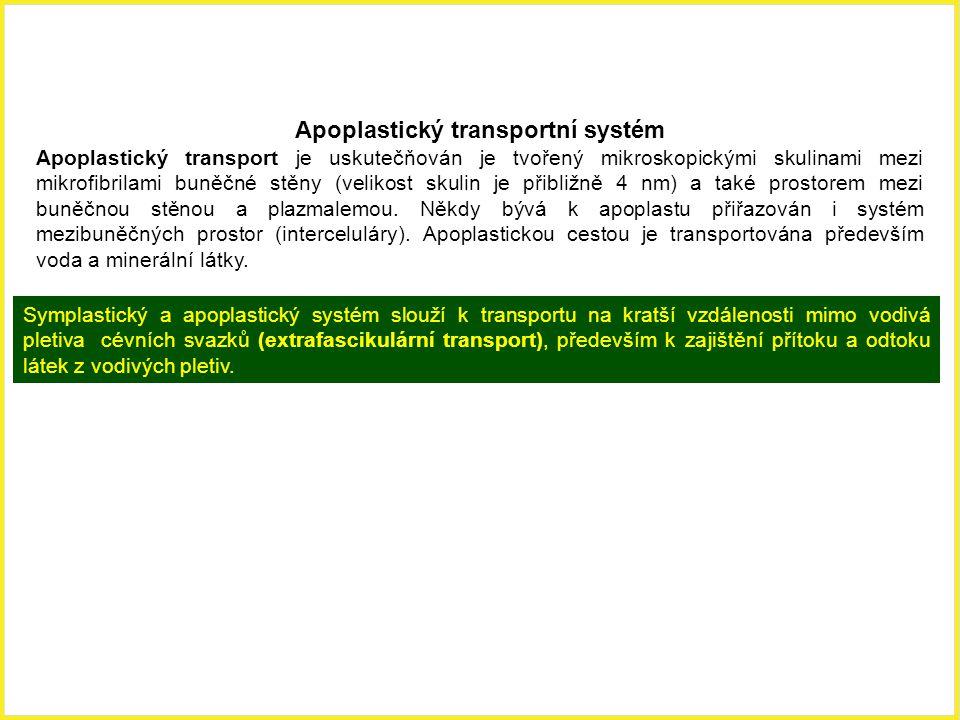 Apoplastický transportní systém
