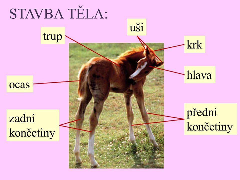 STAVBA TĚLA: uši trup krk hlava ocas přední končetiny zadní končetiny