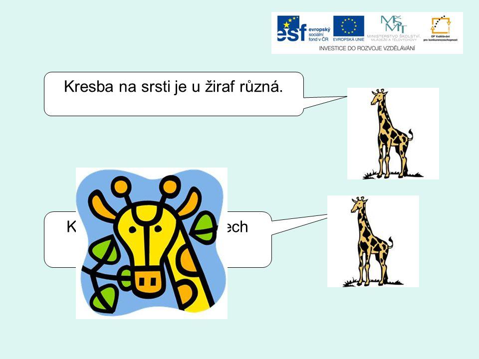 Kresba na srsti je u žiraf různá.