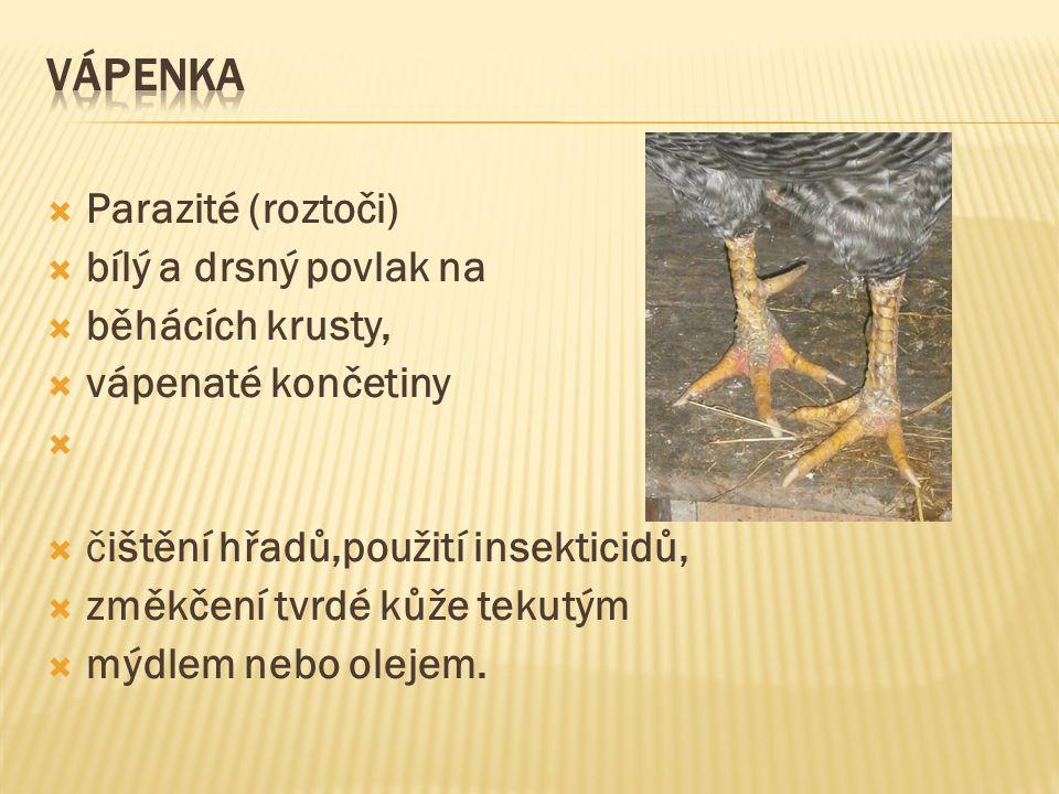 Vápenka Parazité (roztoči) bílý a drsný povlak na běhácích krusty,