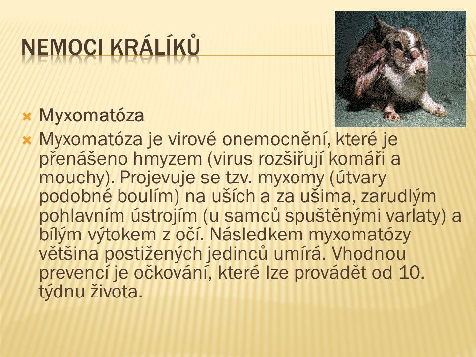 Nemoci králíků Myxomatóza