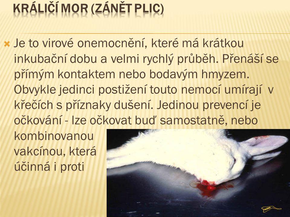 Králičí mor (zánět plic)
