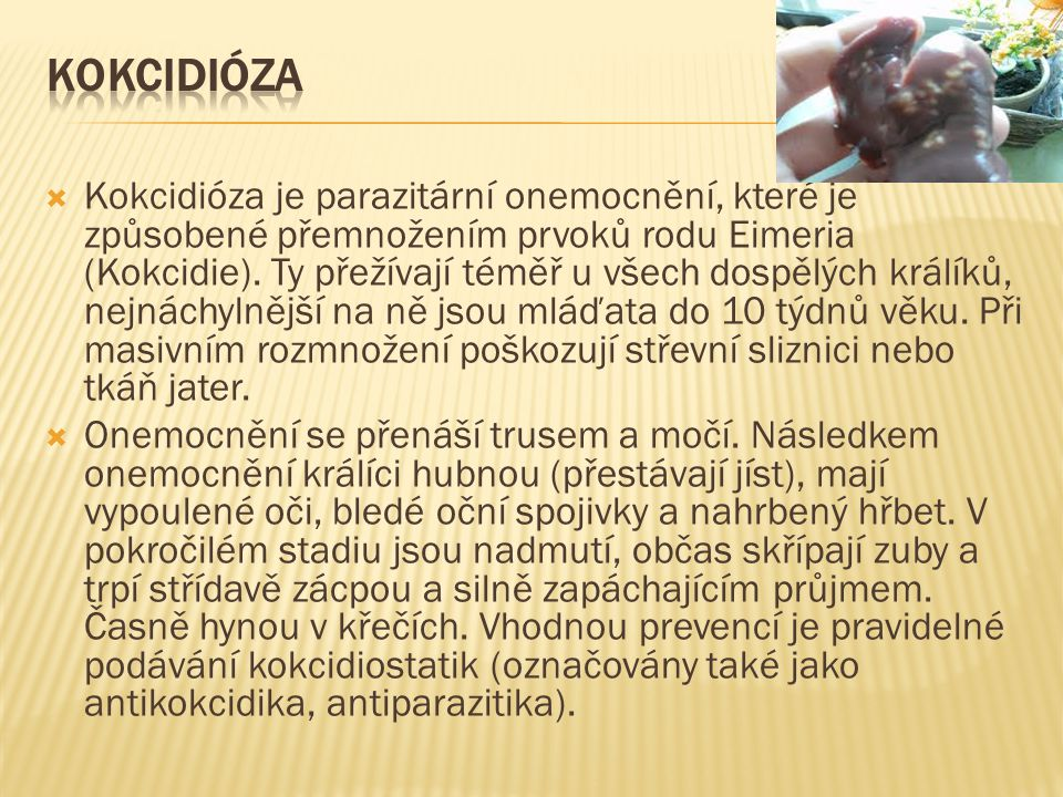 Kokcidióza