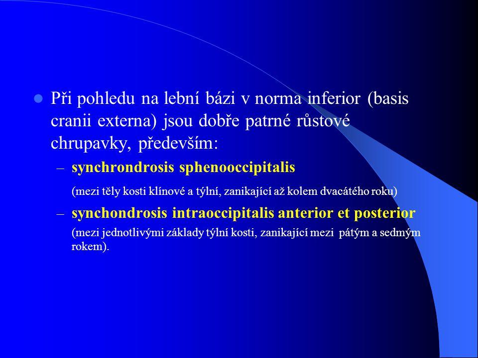Při pohledu na lební bázi v norma inferior (basis cranii externa) jsou dobře patrné růstové chrupavky, především: