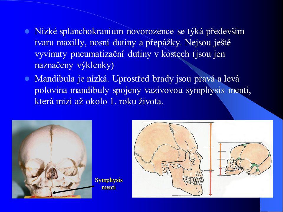 Nízké splanchokranium novorozence se týká především tvaru maxilly, nosní dutiny a přepážky. Nejsou ještě vyvinuty pneumatizační dutiny v kostech (jsou jen naznačeny výklenky)