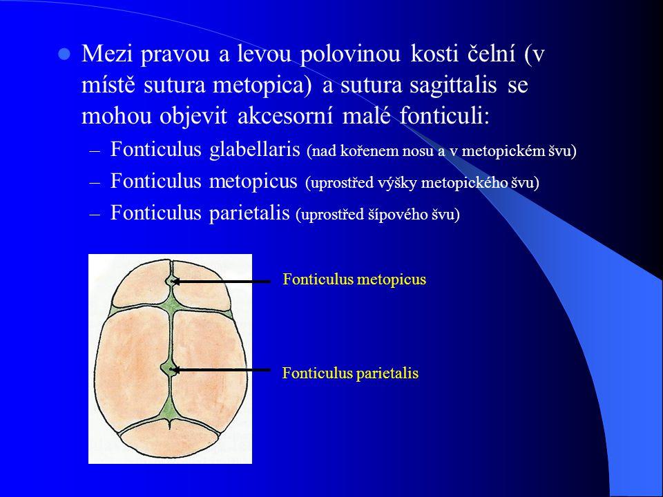 Fonticulus parietalis